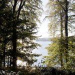 Yogaretreat Danmark skoven
